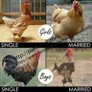single-vs-married-pakfunny