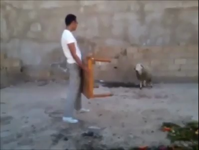 Don't mess with a goat