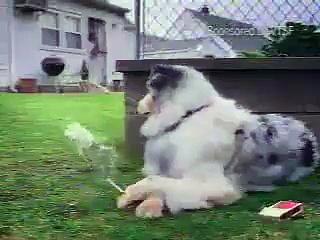 Funny dog smoking