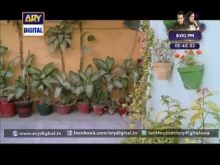 Bulbullay Episode 285